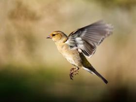 虐杀一只鸟,鼻痛二十年