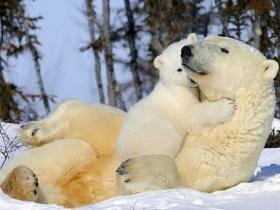 真正的大孝 莫过于爱护一切众生