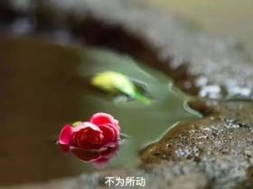 圣贤教育:张兰祥老师报仇12年